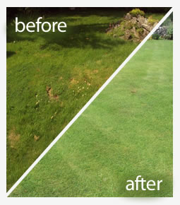 Lawn aeration treatment in Reading