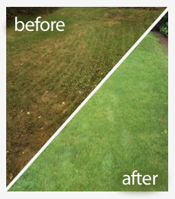 Winter Tonic lawn treatment in Reading
