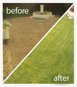 Herbicide lawn treatment in Reading