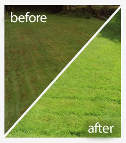 Lawn moss treatment in Reading